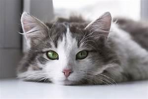Was Tun Gegen Hausstaubmilben : milben bei katzen bek mpfen ratgeber hilfe was tun ~ Frokenaadalensverden.com Haus und Dekorationen