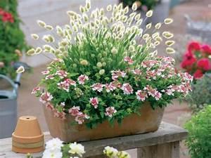 Blumenkübel Bepflanzen Sommer : die sch nsten ziergr ser f r t pfe mein sch ner garten ~ Eleganceandgraceweddings.com Haus und Dekorationen