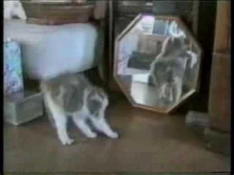 gatti matti video comico da ridere youtube