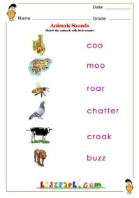 animals worksheet  kids science activity sheet