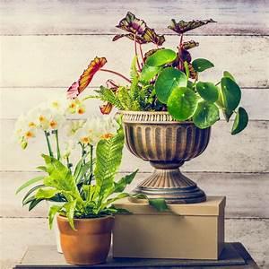 Plantes Et Jardin : pilea plantes et jardins ~ Melissatoandfro.com Idées de Décoration