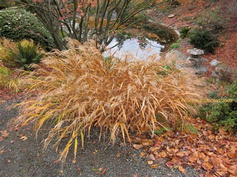 Longhorn Winter Garden. Natureplus