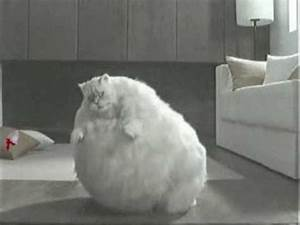 Worlds Fattest Cat!!!! - YouTube