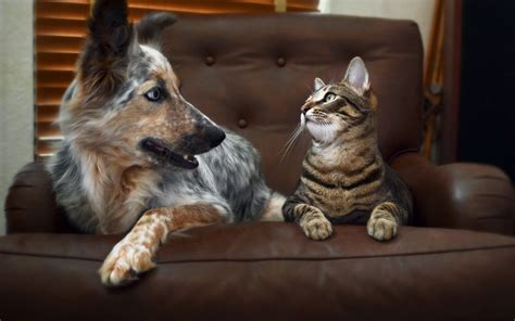 Dogs, Full Hd Paws,cats,mobile Wallpapers, Cat, Animals