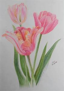 Tulips - Color Pencil Drawing Study by shikifourseasons on ...