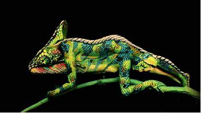 Chameleon Painting Wow Normal Paint Took Cameleon