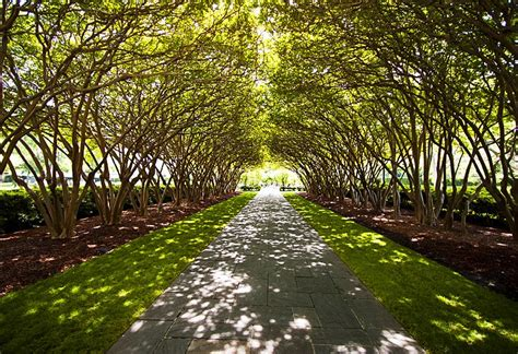 Dallas Garden by Dallas Top 5 Attractions That You Need To Visit