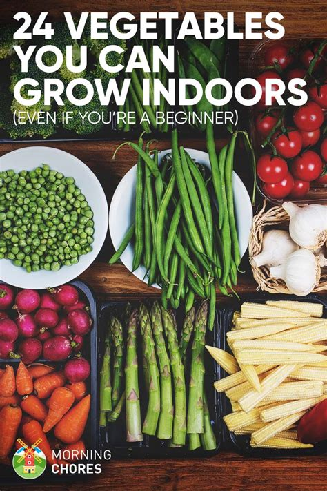 24 Newbiefriendly Vegetables You Can Easily Grow Indoors
