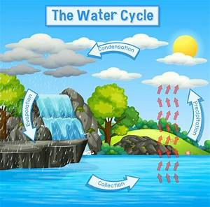 Water Cycle Diagram Shows The Water Cycle From Water