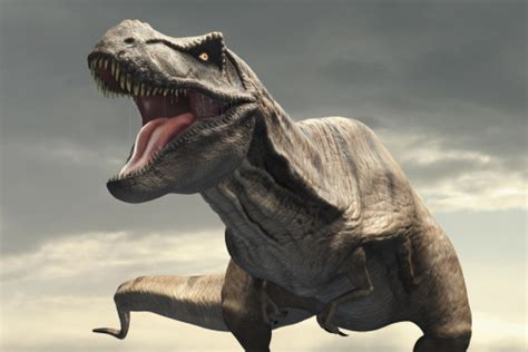 How Many Species Of Dinosaur Were There?
