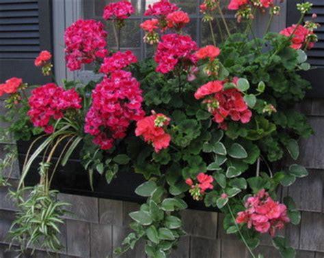 jenis tanaman hias gantung  mempercantik rumah