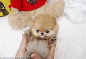 Cutest Dog in the World as a Puppy