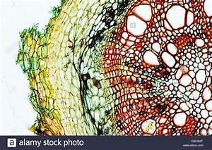 200 Anatomy Backgrounds Biology Botany Bubble Cell Close