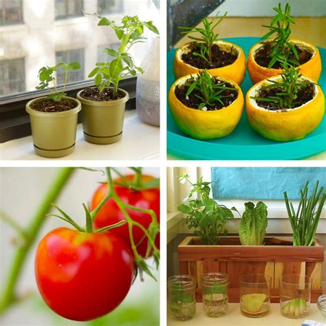 Kitchen Garden Hacks by Make Your Own Kitchen Garden With These Awesome Hacks