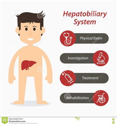 Hepatobiliary Cartoons, Illustrations & Vector Stock