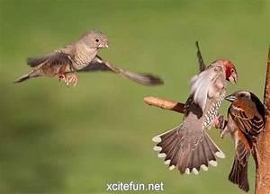 Dramatic Animals - Stunning Moments Captured - XciteFun.net