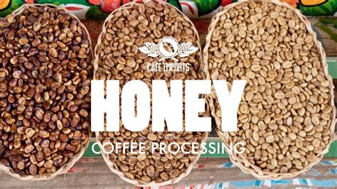 What happens to the beans? Honey Coffee Processing - YouTube