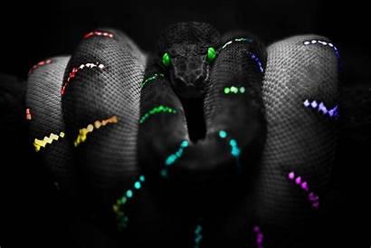 Snake Neon Wallpapersafari Verdes Fondo Serpiente Ojos
