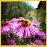 Welche Blumen Für Bienen : 1 million stimmen gegen bayers bienenkiller klage blumen gegen bienensterben netzfrauen ~ Eleganceandgraceweddings.com Haus und Dekorationen