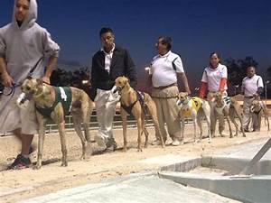 Naples fort myers greyhound track bonita springs 2018 for Naples dog track