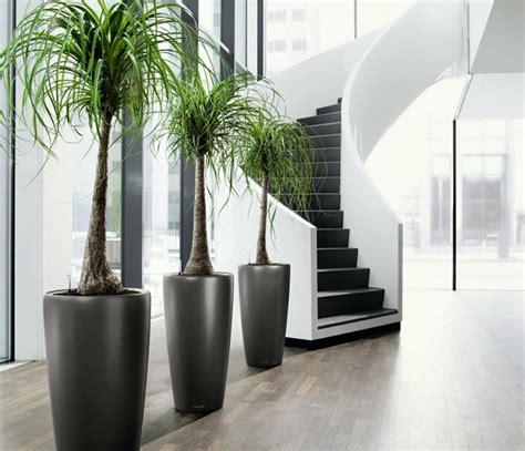 schoene zimmerpflanzen moderne pflegeleichte topfpflanzen