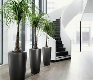 Robuste Zimmerpflanzen Groß : sch ne zimmerpflanzen moderne pflegeleichte topfpflanzen ~ Sanjose-hotels-ca.com Haus und Dekorationen