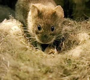 Mäuse Bekämpfen Haus : mause im garten ~ Michelbontemps.com Haus und Dekorationen