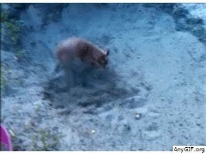 Cat Playing GIF - Find & Share on GIPHY