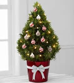 Which Christmas Tree Smells The Best top 5 christmas trees for small spaces the san diego