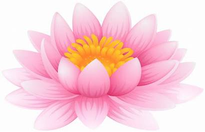 Lotus Flower Lily Water Clip Clipart Flowers