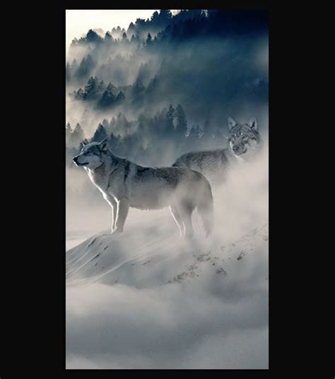 1080p Wolf Wallpaper Hd For Mobile by Wolf Pack Hd Wallpaper For Your Mobile Phone