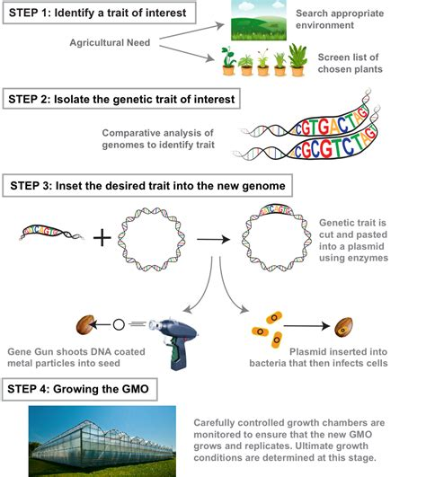 top 10 questions science can t answer template understanding genetically modified foods and crops and