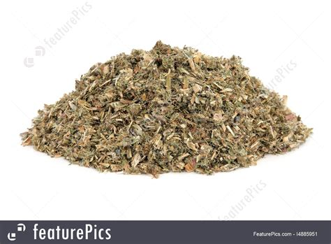 Photo Of Blessed Thistle Herb