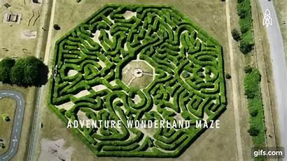Hedge Mazes
