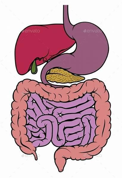 Tract Diagram Gastrointestinal Gut Anatomy Human Digestive