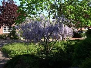 Kleiner Baum Garten : bluhende baume fur den vorgarten ~ Lizthompson.info Haus und Dekorationen