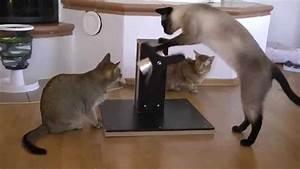 Sisalteppich Für Katzen : spielzeug f r katzen youtube ~ Orissabook.com Haus und Dekorationen