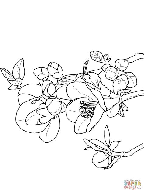 Kleurplaat Petunia by Quince Flower Coloring Page Free Printable Coloring Pages