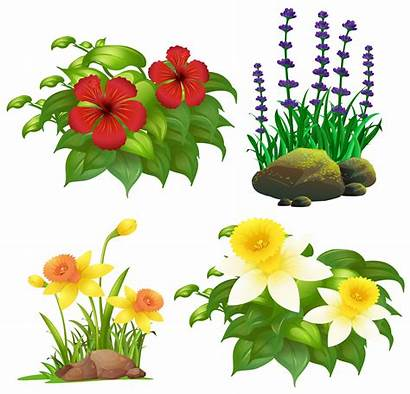 Types Flowers Different Tropical Vector Plants Clipart