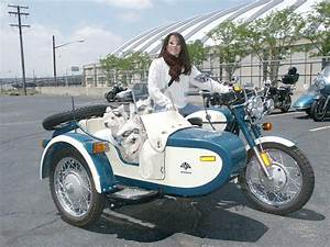 Motorcycle+Sidecar+dogs=win | Stuff with Wheels ...