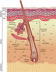 Skin Tissue Engineering