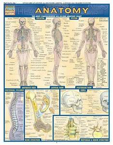 Anatomy Of The Body I Bought This Chart And A Few Others