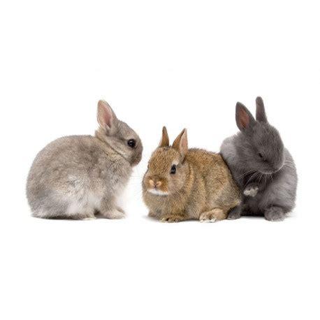 sticker mural lapin en famille univers animaux de la