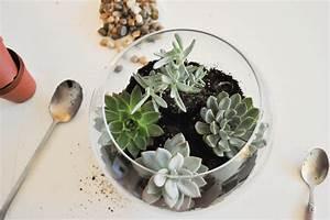 Terrarium Plante Deco : diy faire son terrarium de plantes ~ Dode.kayakingforconservation.com Idées de Décoration