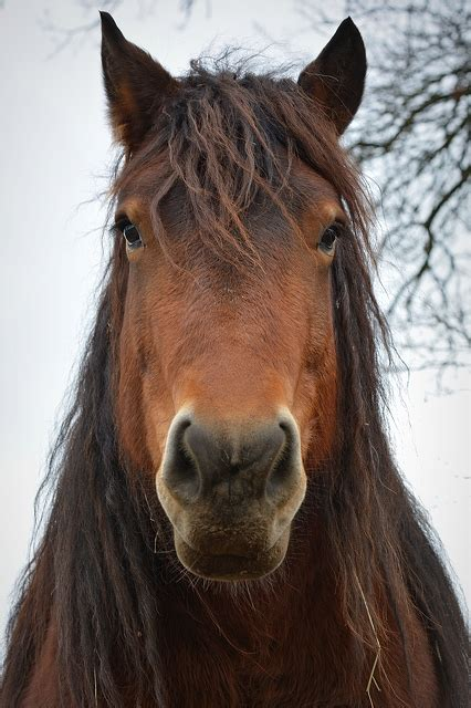 Horse Face Front