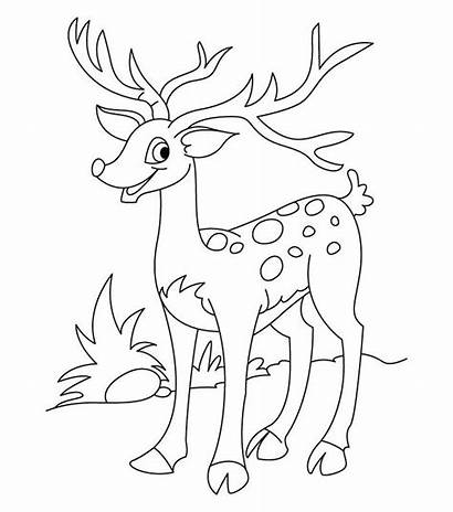 Deer Coloring Template Animal Templates Tail