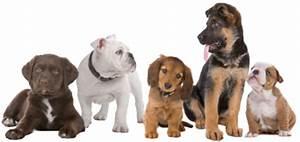 Elenco delle razze di cane, riconosci il cane