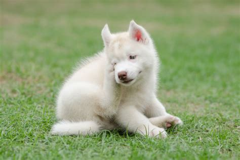 do all dogs shed their fur 100 do all dogs shed their fur best 25 non shedding