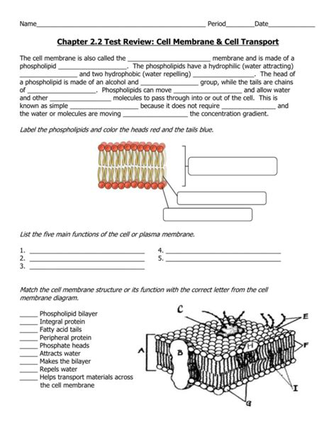 Cell Membrane And Tonicity Worksheet Homeschooldressagecom