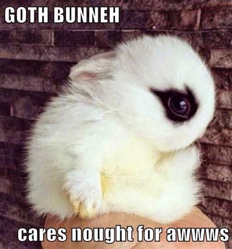 Bunny Meme - rabbit ramblings funny bunny memes